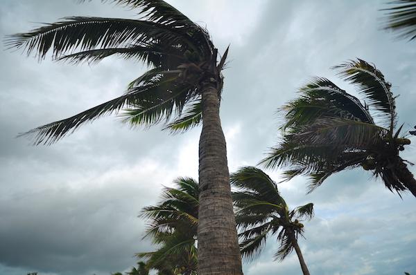 palm tree, hurricane, storm
